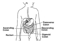 diagram of gastrointestinal tract