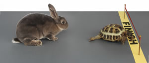 In the race of life, better an adaptable tortoise than a fit hare
