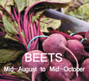Beets:  Mid-August to Mid-October
