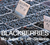 Blackberries:  Mid-August to Late-September