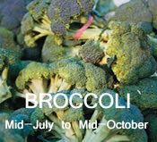 Broccoli: mid-July to mid-October