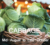 Cabbage: mid-August to late-October