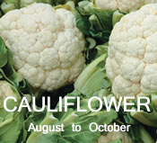 Cauliflower:  August to October