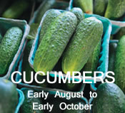 Cucumbers:  Early August to Early October