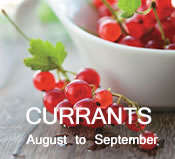 Currants:  August - September