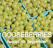 Gooseberries:  August to September