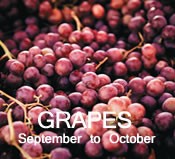 Grapes:  September to October