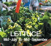 Lettuce:  mid-July to mid-September