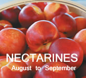 Nectarines: August to September
