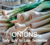 Onions:  Early July to Late-September