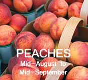 Peaches: mid-August to mid-September