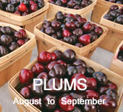 Plums: August to September