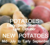 Potatoes:  Mid-July to October