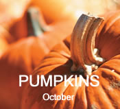 Pumpkins: October