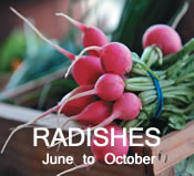 Radishes:  June to October