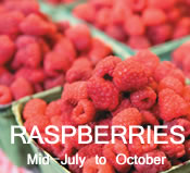 Raspberries:  mid-July to October