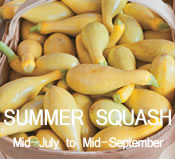 Summer Squash:  mid-July to mid-September