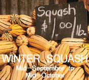 Winter Squash:  Mid-September to Mid-October